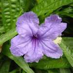 Жасмин - цветок высоких чувств
