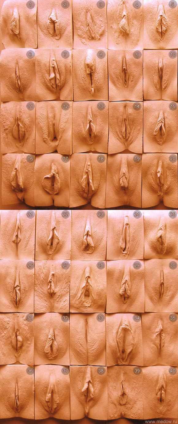 Vagina size