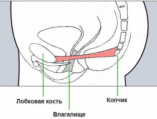 Лобково-копчиковая мышца у женщин. Где находится мышца Кегеля