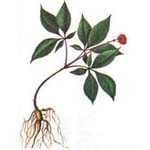 Травы для повышение либидо у мужчин