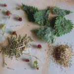 Травы для повышения либидо у женщин
