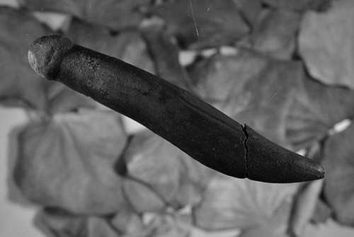 Ученые из университета германского города Тюбингена считают, что именно им удалось найти древнейшую в мире секс-игрушку, возраст которой насчитывает 28 тысяч лет.